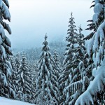 snow-covered-trees_web