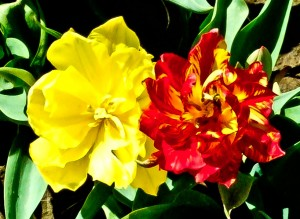 summer-flowers_web